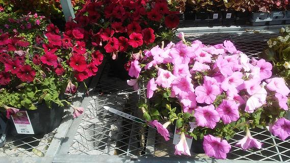 Walmart Flowers 5.jpg