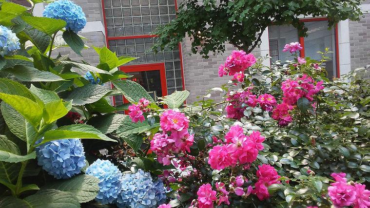 Blue Hydrangea with Pink Flowers 1.jpg