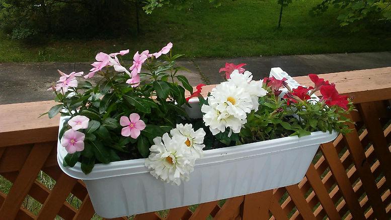 Grandmas Flowers.jpg