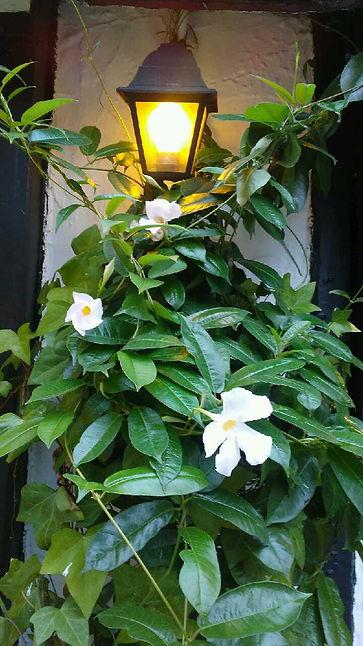 Light and White Flowers.jpg