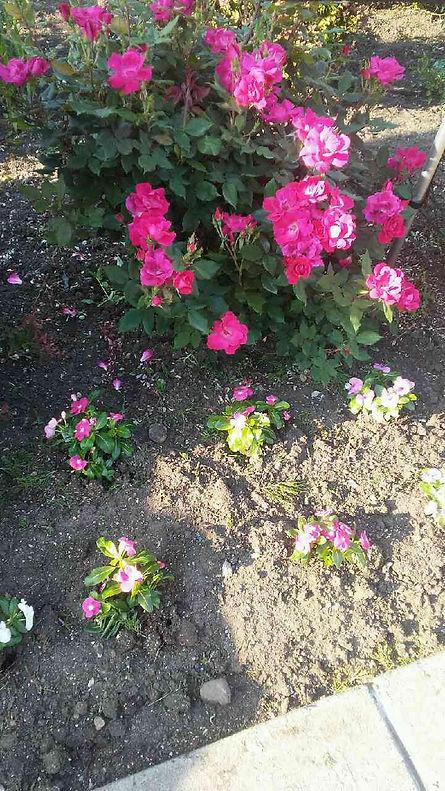 Light Shade Flowers 2.jpg