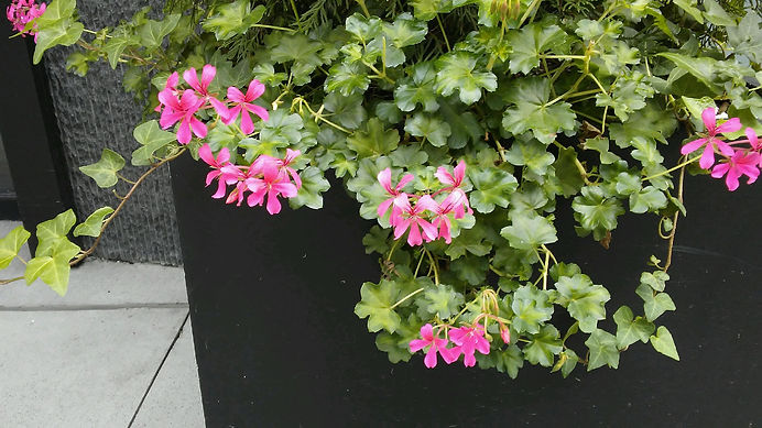 Low Pink Flowers.jpg