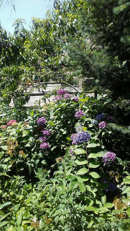 Botanic Garden Flowers.jpg