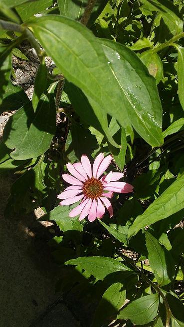 USSC Flowers 27.jpg