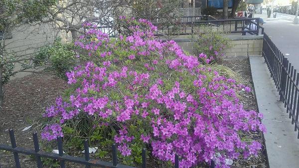 Tiny Purple Hibiscus 2.jpg