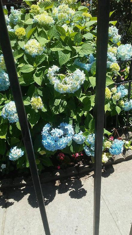 Church Gate Flowers 2.jpg