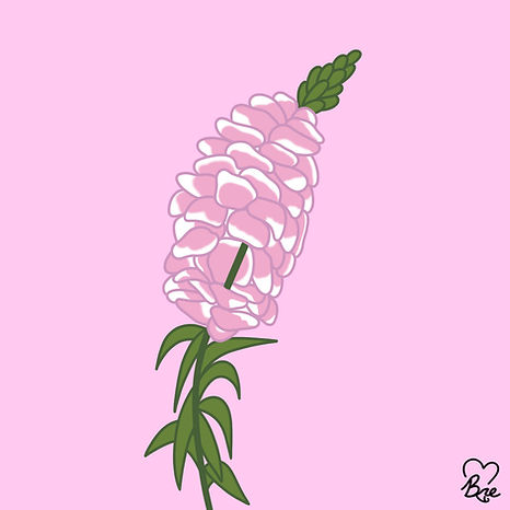 67. Snapdragon - Dragon Flower - Antirrh
