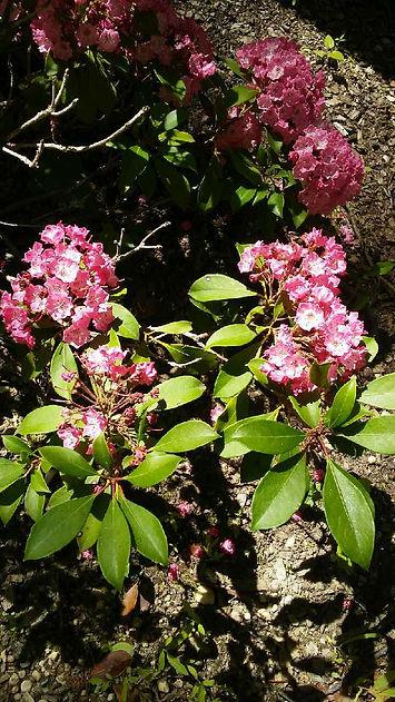 USSC Flowers 2.jpg
