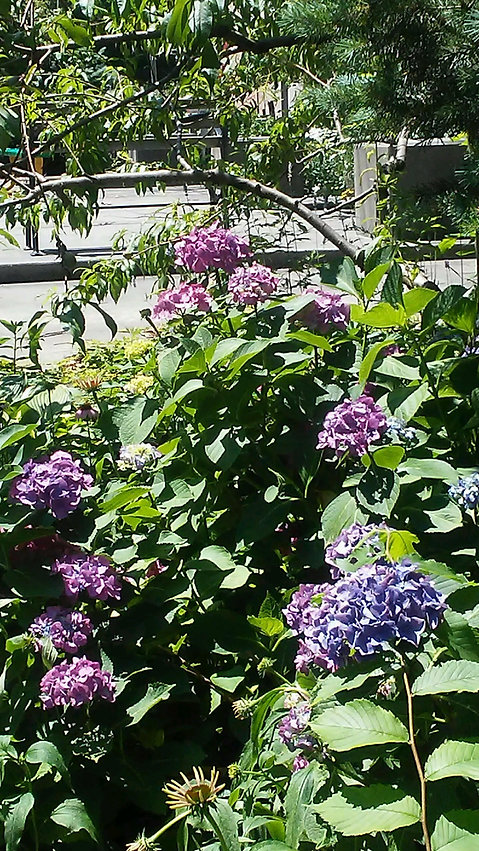 Botanic Garden Flowers 1.jpg