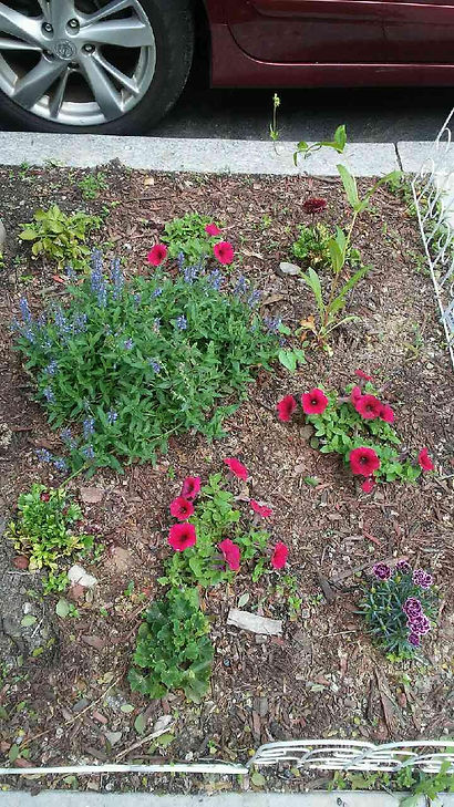 Flowers and Plants in Wood Chips 1.jpg