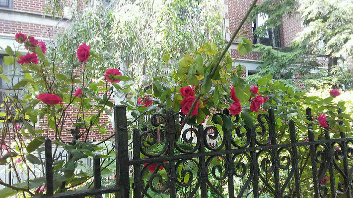 Roses and Gate.jpg