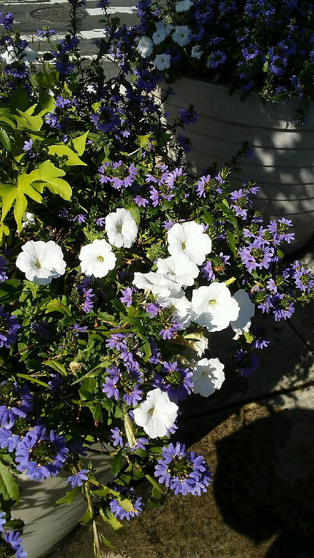 Union Sq. Pot Flowers 2.jpg