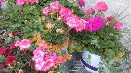 Walmart Flowers 1.jpg