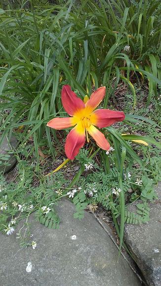 USSC Flowers 21.jpg