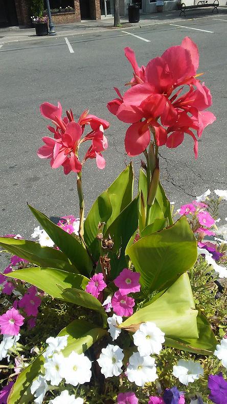 Rockville Center Flowers.jpg