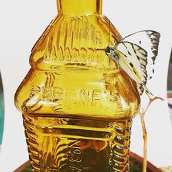 Calypso Butterfly