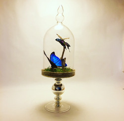 Pedestal Blue Morpho