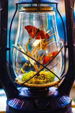 Blue Lantern - Dietz Monarch