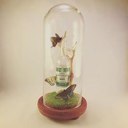 #Absinth makes the heart grow fonder_ #FlutterbyKatie #OneOfAKind #ButterflyArt #MadeInBrooklyn #Han