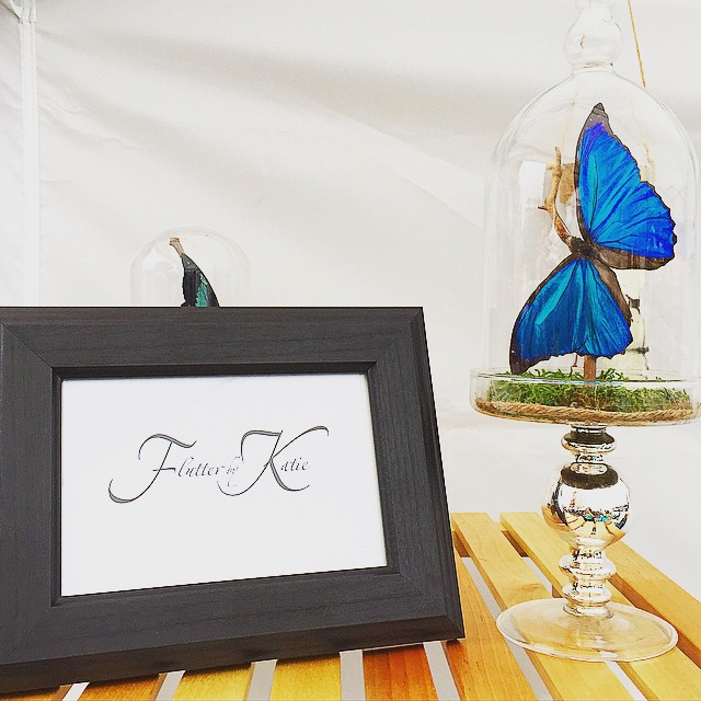 Gray day_ Not when you have a #BlueMorpho on your shelf! #MadeInBrooklyn #Handmade #FlutterbyKatie #