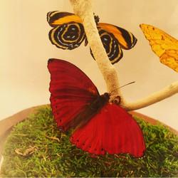 Red Glider (closeup)