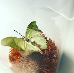 Accent Mint Green Glider closeup