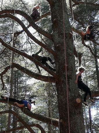 grimpe_d'arbre_la_corde_joux_haute_savoi