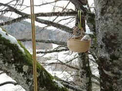 grimpe_d'arbre_la_corde_joux_haute_savoie_nuité_perché_74_education_environnement_activité_physique_