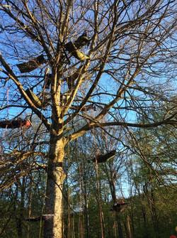 grimpe_d'arbre___la_corde_joux_haute_savoie_education_environnement_activité_physique_de_pleine_natu