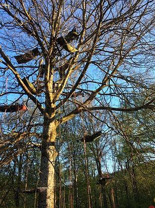 grimpe_d'arbre___la_corde_joux_haute_sav