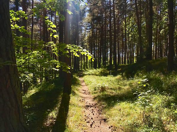 Skovly-skoven