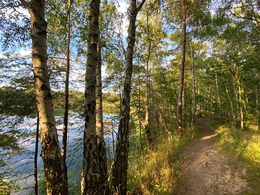 Skovly-sporet ved safirsøen