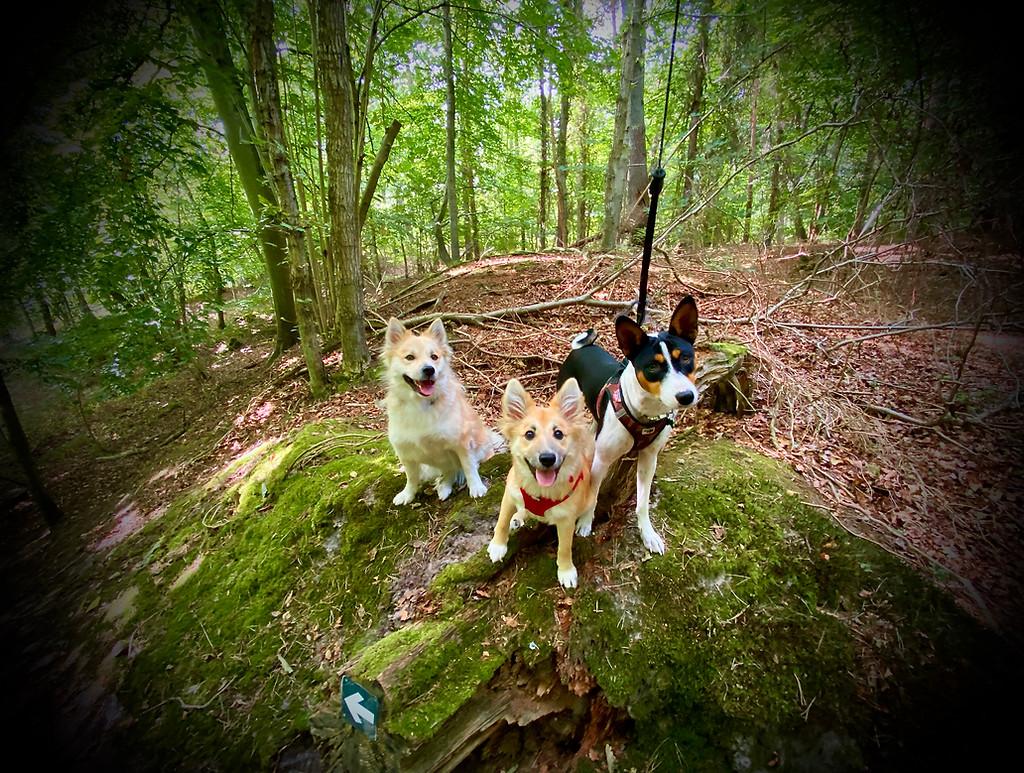 Skønne hunde på Skovly