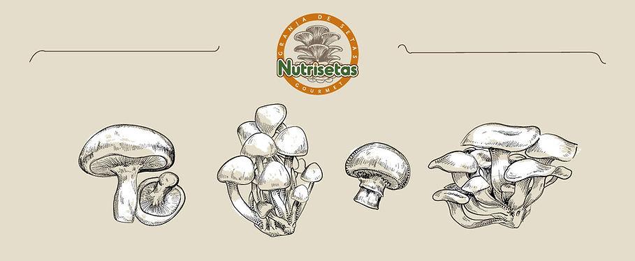 Nutrisetas-Asesorias.jpg