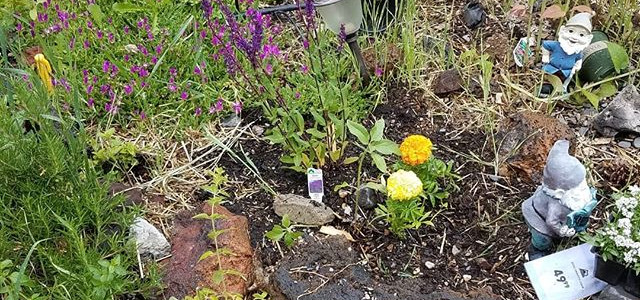 New Growth Bee Balm Planted #FeedMyCity creator and owner #MindyDougherty #joinme #followmeplease looking volunteers and sponsors _Thanks so