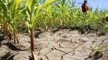 The GMO Controversy in Chile