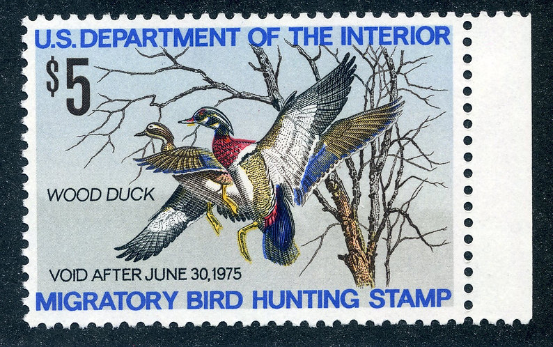 RW41 1974 US Department of the Interior - Wood Duck - $5 MNHDuck Hunting Stamp