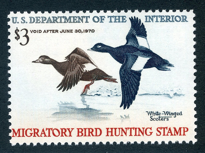 RW36 1969 US Department of Interior - White-Winged Scoters - $1 Used Duck
