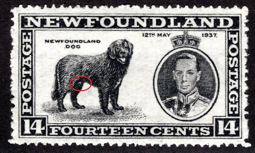 """222, NSSC, Newfoundland, """"Male Dog"""" variety, 14c, XF/SUPERB, MLHOG, Scott 238v"""