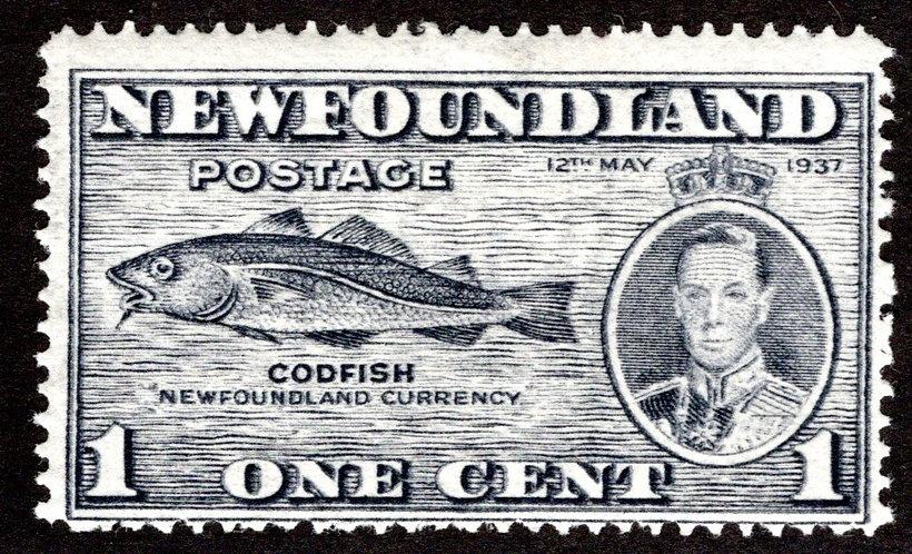 216bVII-1, NSSC, Newfoundland, 1c, PARTIAL DOUBLE PRINTED, MLHOG, Codfish