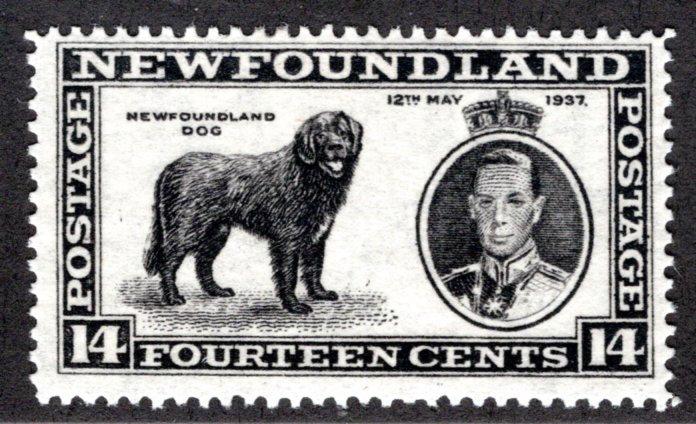 222, NSSC, Newfoundland,14¢ Newfoundland Dog, black,MLHOG, F/VF