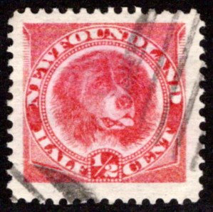 39, NSSC, Newfoundland, 1/2c, rose red, Newfoundland Dog, Used, F, Scott 56
