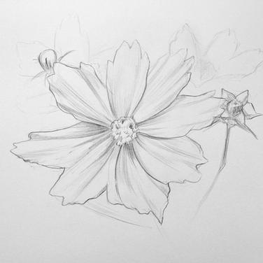 Flower three