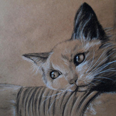 Cat two