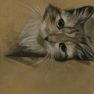 Cat one.