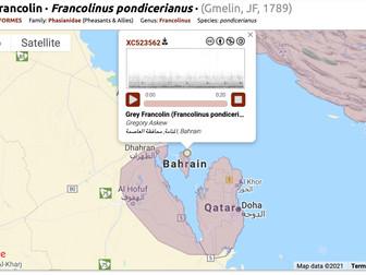 Grey Francolin in the KSA – Status Unknown