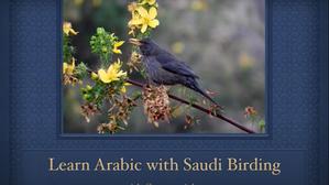 Learn Arabic with Saudi Birding