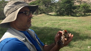 Working Together for Saudi Birds: An Interview with Abdullah Al Suhaibany