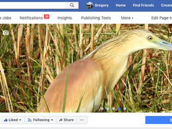 The Ultimate Saudi Birding Web Portal!
