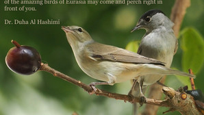An Interview with Dr. Duha Al Hashimi, The First Female Birdwatcher in Saudi Arabia*
